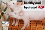 Brookside Agra's Brook-Lytes Provides Buffered Electrolytes For Swine