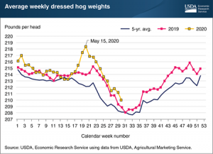 USDA: Falling Hog Weights Suggest Industry Is Managing Supply-Chain Disruptions From COVID-19