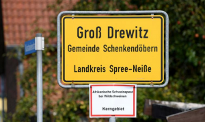 Germany confirms one more African swine fever case in wild boar