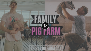A Day On A Family Pig FARM trying to get a Hog Shed Built