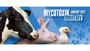 BIOMIN Mycotoxin Survey in US and Canada: January 2021 Update